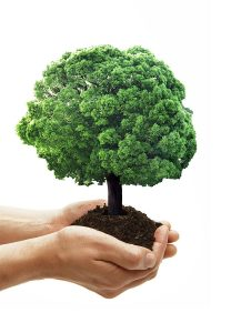 sostenibilità_ambientale