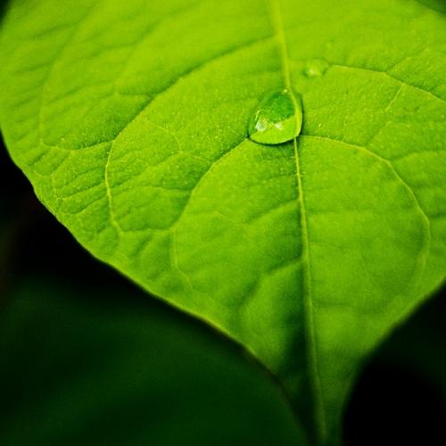 impatto_ambientale