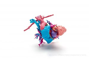 SMALL - IMAGE 4_3D Printed Full Color Heart_Credits Needed_Phoenix Childrens Hospital_HP Jet Fusion