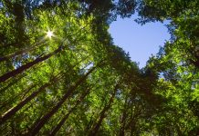 Konica Minolta_sostenibilità