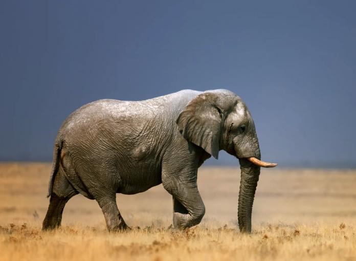 Dell Technologies elefanti